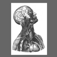Ahoi Anatomie Torso
