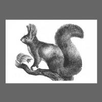 Ahoi Eichhörnchen