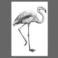 Ahoi Flamingo