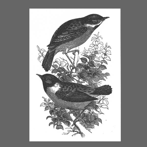 Ahoi Vögel
