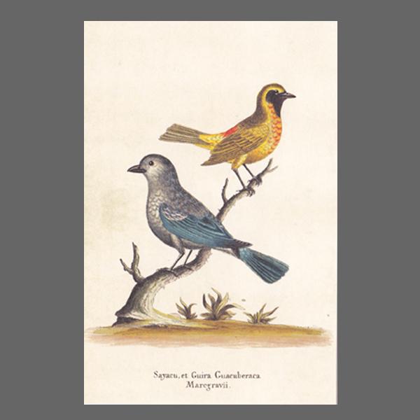PK ST 2 Vögel 256-3