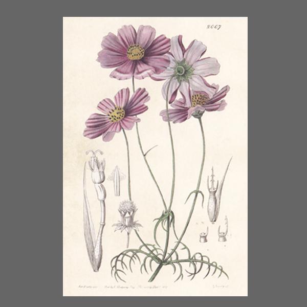 PK ST Blumen 229-3