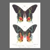 PK ST Schmetterling grünblack 188-3