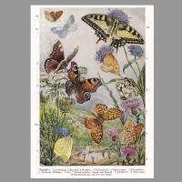 011 PVBT Schmetterlinge